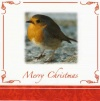 Christmas Cards - Merry Christmas Robins - Pack of 10 - CMS